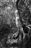 Whitcliff woodland